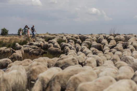 http://in.drenthe.nl/nl/p/