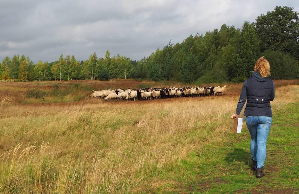 Lekker wandelen in Drenthe