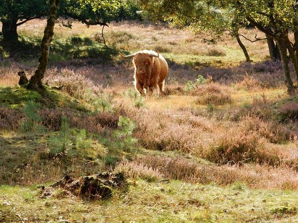 Natuurgebied Scharreveld